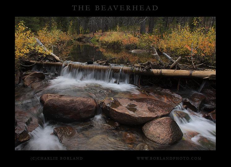 Elklhorn Creek in Beaverhead NF Montana.